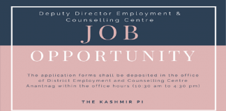 Job opportunity at Deputy Director Employment & Counselling Centre