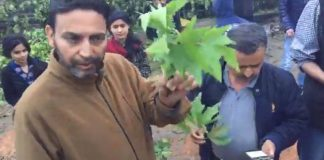 Civil society starts Save Chinar campaign against chopping of Chinars