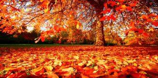 Autumn (HARUD)
