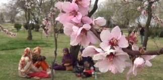 Nauroz - The festival of nature!