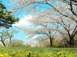 In Spring - A Poem
