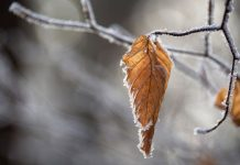 Apple Valley - Leaf - Potrait